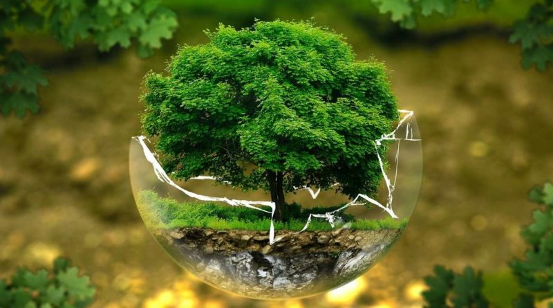 impact de la covid 19 sur l'environnement